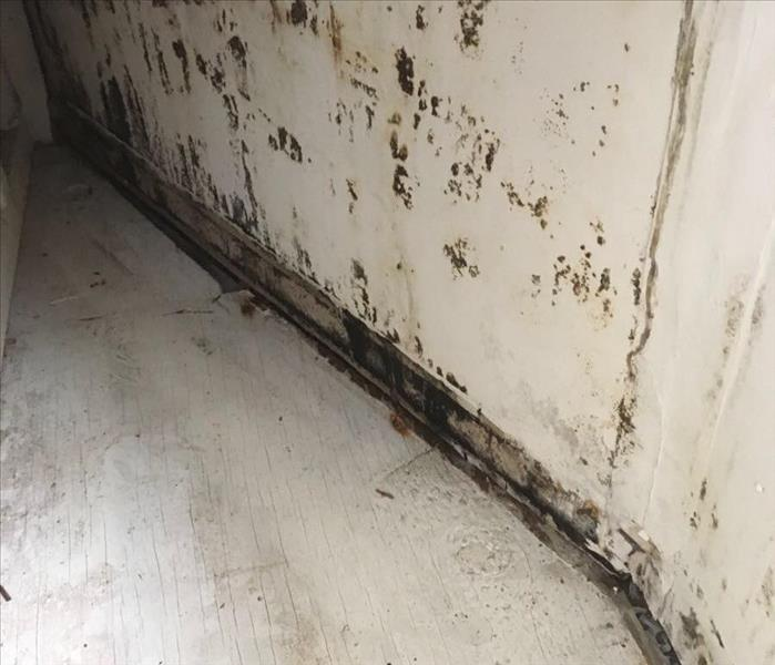 Mold Found In Home Window seat Before