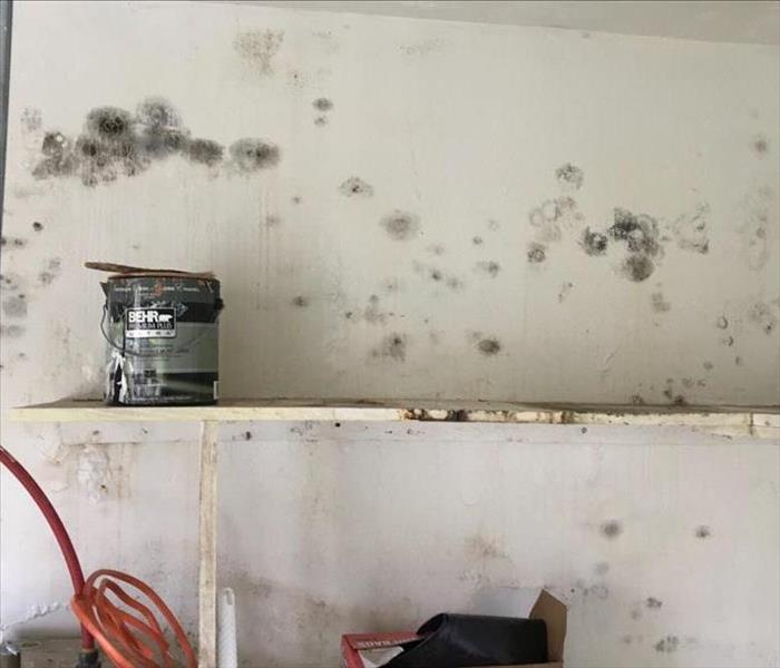 Boiler Room Mold Restoration