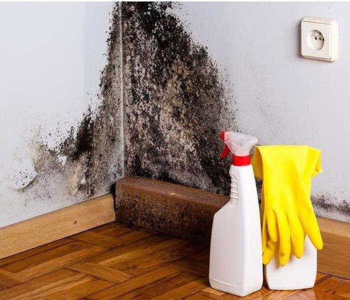 Mold Remediation Mold Danger After a Storm!